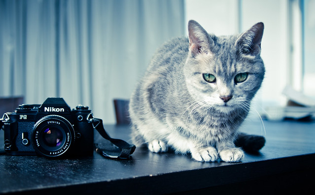 The camera and the cat