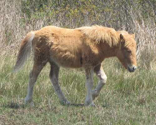 foalonemonth2 - Copy