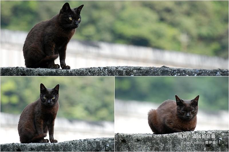 2010_0330_侯硐。滿滿都是貓blackcats