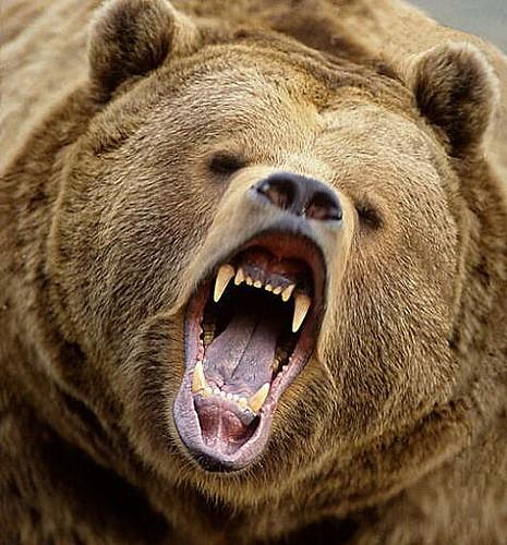 bearmode
