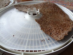 2012.06_dehydrating flaxseed crackers