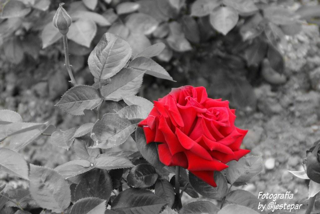 Rosa.  Rincones de #valladolid #photo by #jestepar
