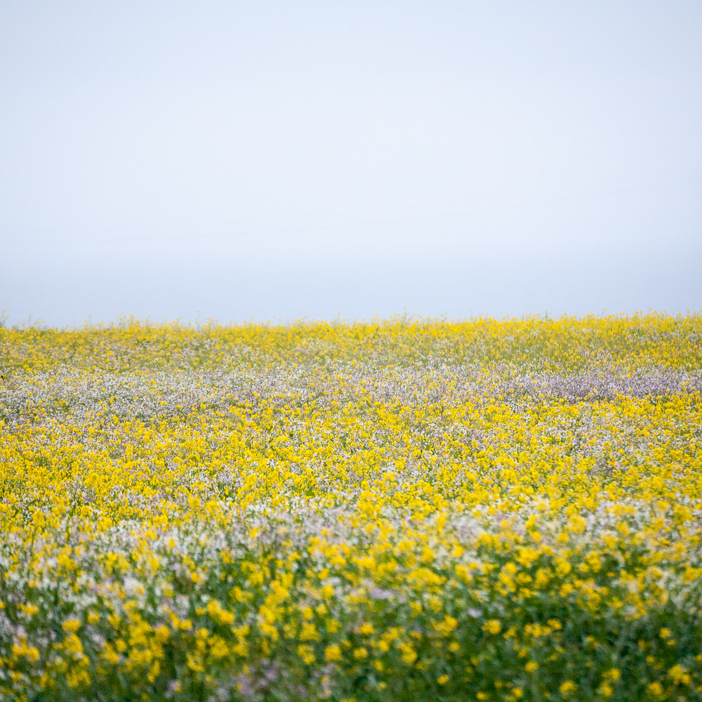 Sea of Flowers