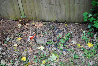 Garden fence before