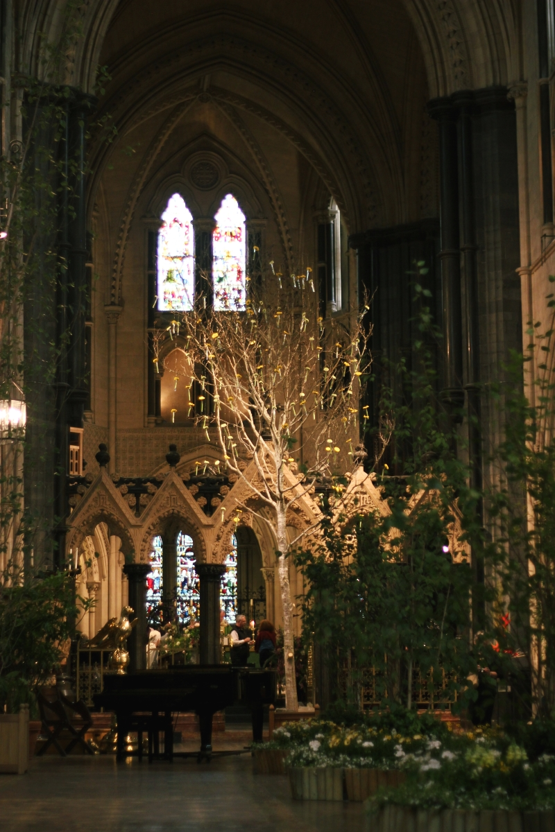 tree in the cathedral