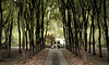 Manicured Woods