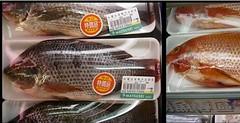 超市裡的吳郭魚。(攝影:張泰迪。)