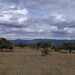 Campo - Countryside;  cerca de Milpillas de la Sierra, al sur de Jimenez de Teul, Zacatecas, Mexic por Lon&Queta