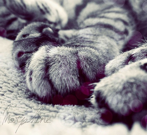 Paw [ EXPLORED ]
