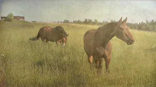 horses horse texture field finland meadow simplybeautiful tatot arttex