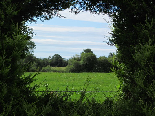 ireland window hedge ballyfin