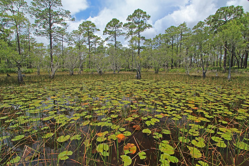Pond 2, St. Marks National Wildlife Refuge, Wakulla County, Florida 1