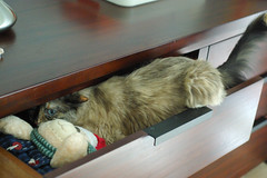 Mayori opens the toy drawer!