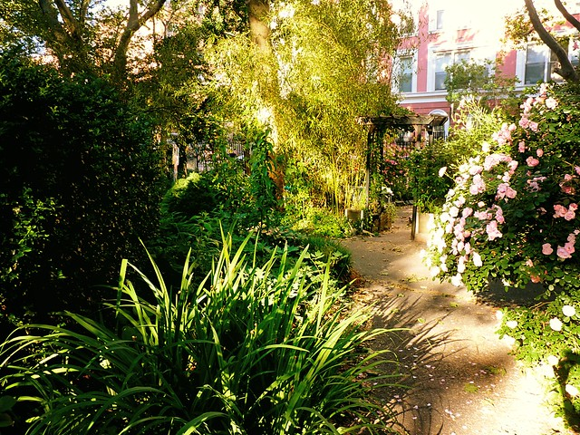 M 39 Finda Kalunga Community Garden East Village New York City 02 Flickr Photo Sharing