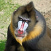 Mandrill - Look your eyes....