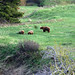 Small photo of Grizzly family