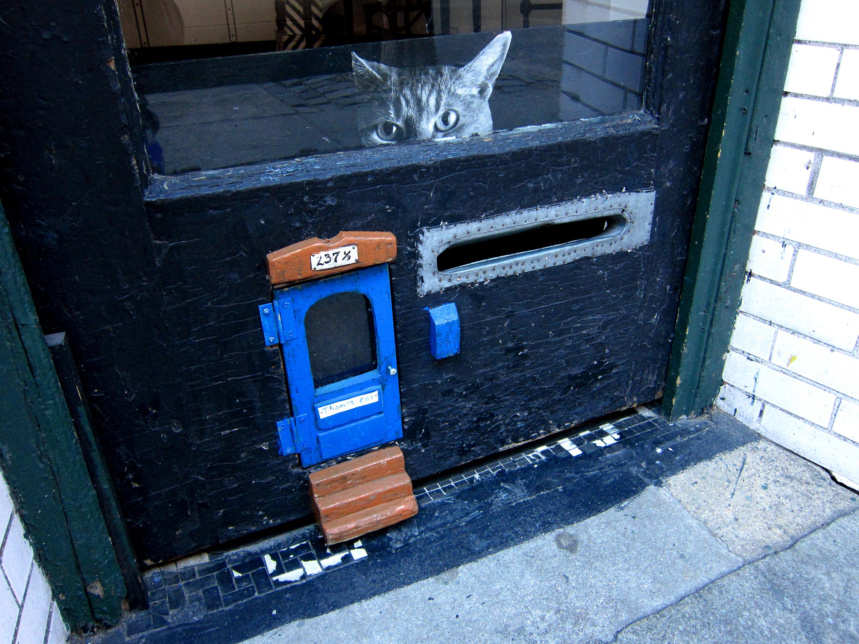 Thomas Cat