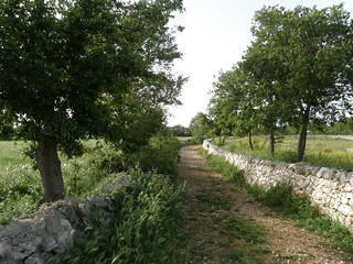 OASI-Romanazzi