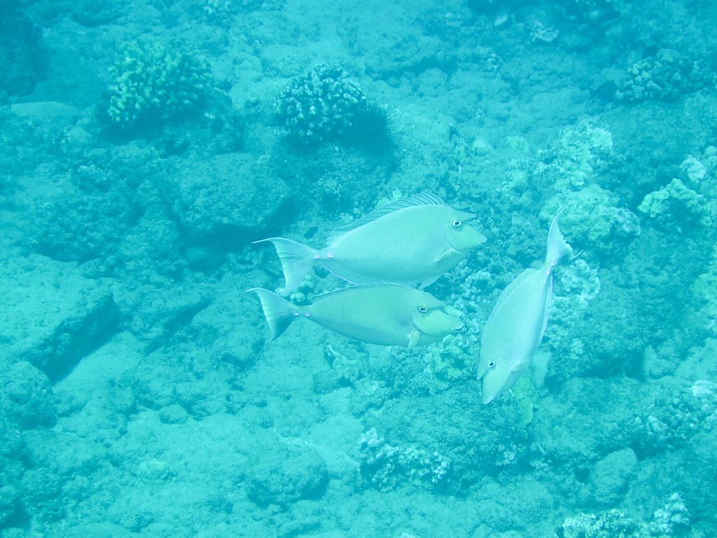 Maui Fishes