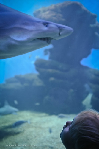 eye to eye with a shark