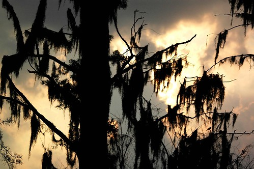 sunrise ga georgia nikond70 spanishmoss augustaga baldcypress georgiasunrise southernsunrise phinizyswampnaturepark june2011 sigmaaf70300mmf456apodgmacrolens june3rd2011 phinizysunrise
