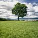 árbol by bdebaca