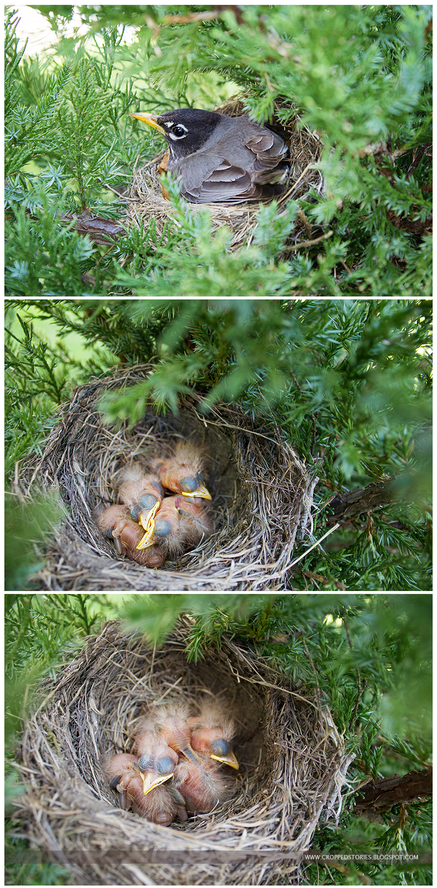 Birdie's Nest outside my slider via Cropped Stories