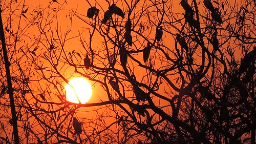 trees sunset india nature birds view majestic tripura agartala narsingarh asianopenbillstorks nikoncoolpixp520 tripuraindia