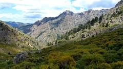 Dans la descente du versant Nord de Bocca di Serra Piana