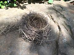 root(0.0), branch(0.0), soil(0.0), nest(1.0), bird nest(1.0),