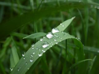 Grashalm mit Regentropfen