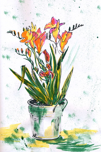 May 2014: New Freesia