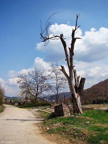 nature landscape tree blinkagain photographyforrecreation природа риванова rivanova българия bulgaria