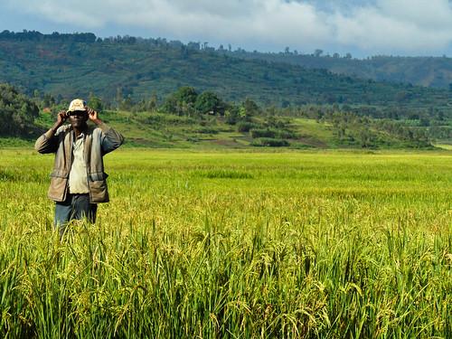 africa farmer burundi