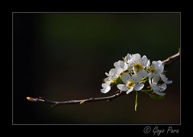 Un adorno en la rama