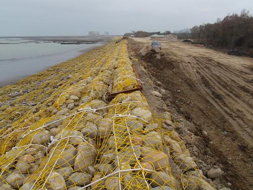 防突堤侵蝕沙嘴影響紅樹林而建的護堤。照片遠方隱約可見大潭電廠凸堤。拍攝日期2009年2月3日。(攝影:黃建基)