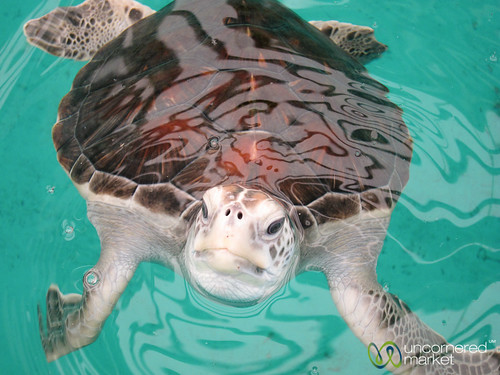 Sea Turtle, Mexico