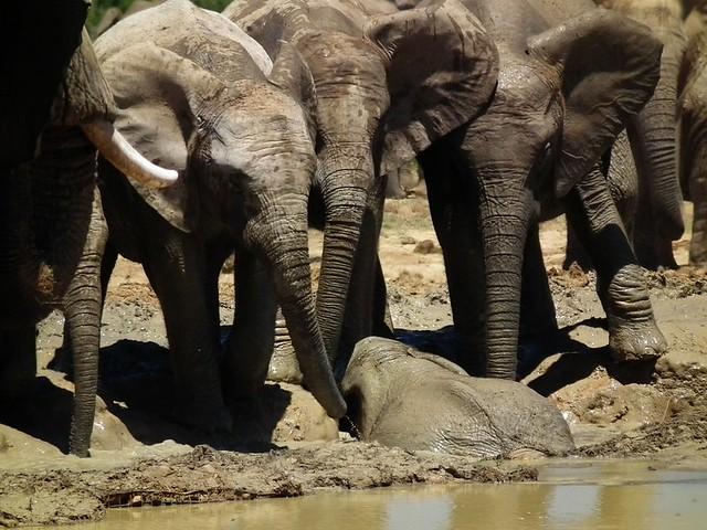 Elefantes y su cría - Sudáfrica