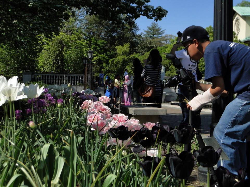 77-21apr12_3950_Botanical_garden_tulip
