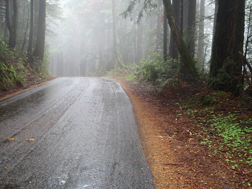 Ridgecrest in the redwood rain