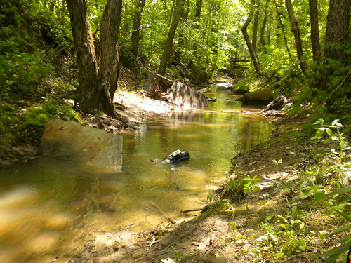In some streams, trash is the largest and most stable cover available to crayfish. (U.S. Forest Service/Susan Adams)
