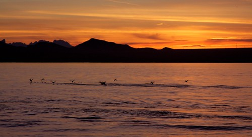 sunset arizona orange usa mountain water birds silhouette america landscape fly flying dusk flight ducks lakehavasu benjaminhall benjaminhallphotocom