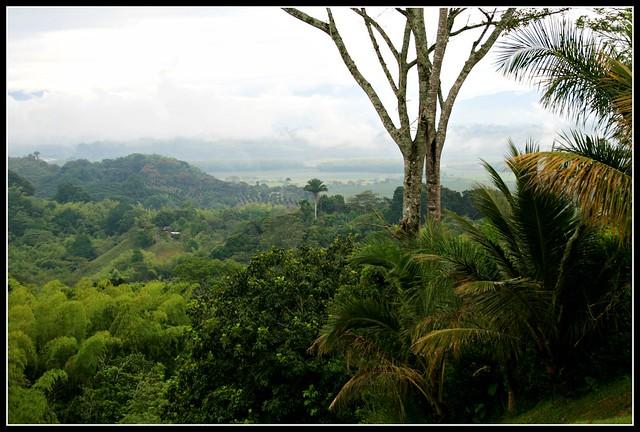 Imagen del Valle de Maravelez en la Tebaida, Quindio