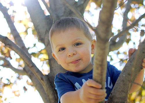 Toddler in a Tree 3