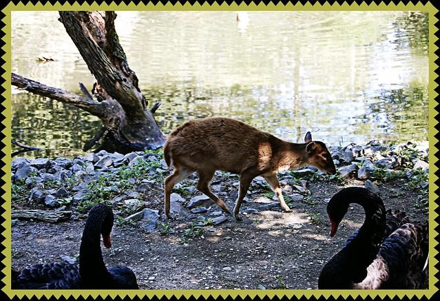 Zoo0712 008