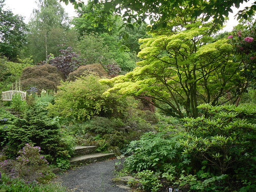 Acer in Branklyn Gardens, Perth,