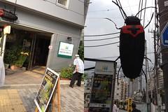 ホタルの夕べ、行ってきたよ! (2012/6/24)