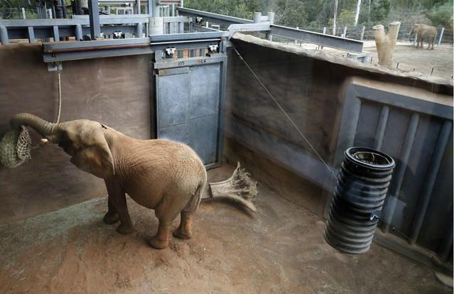 1m-elefante.jpg