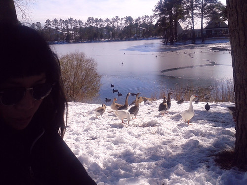 Ana and the Geese Gang (2)(Jan 30 2014)