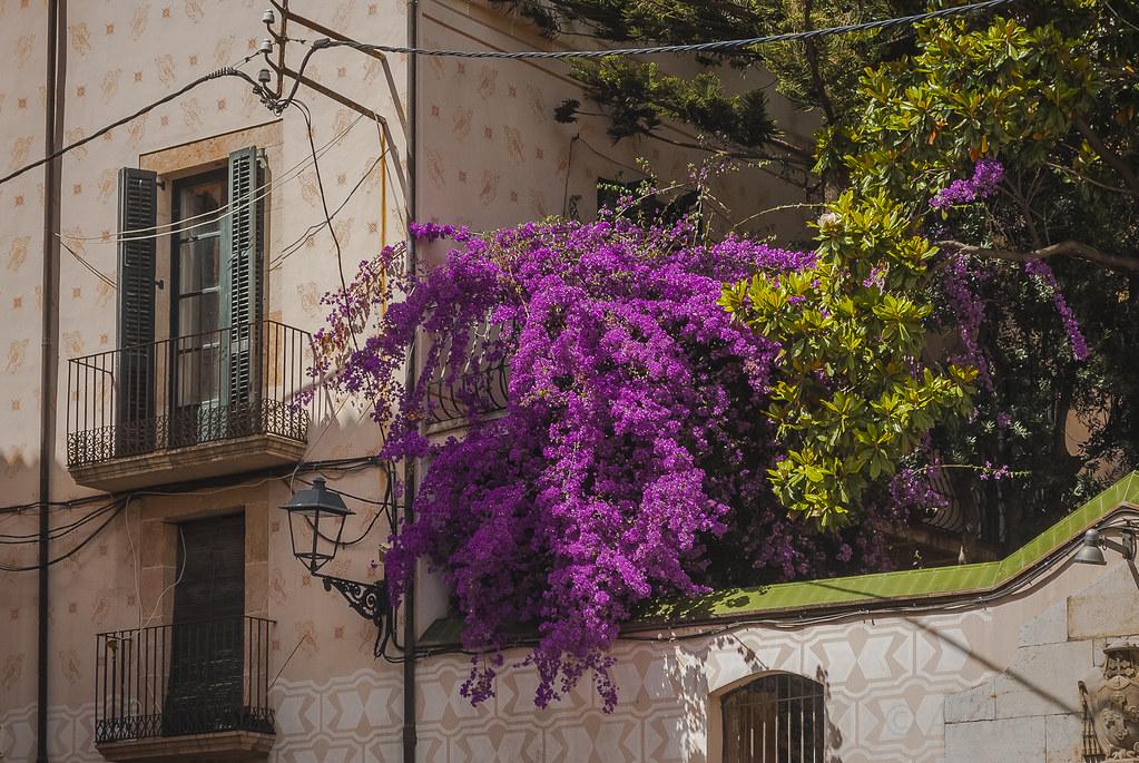 Тарраго́на Tarragona DSC_5049
